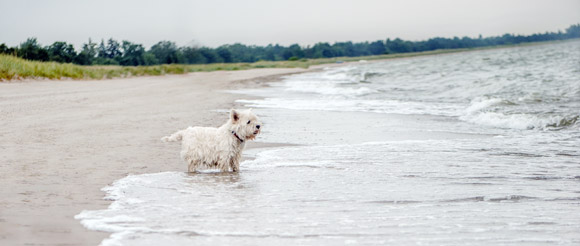 Hund in Marielyst am Strand auf Falster