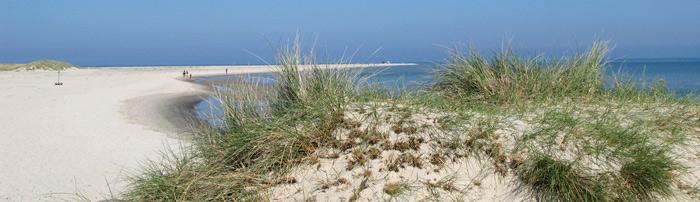 Stranddüne in Dänemark