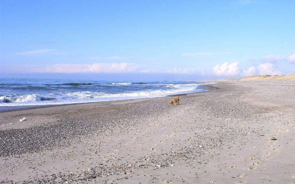 Strand Vedersø Klit